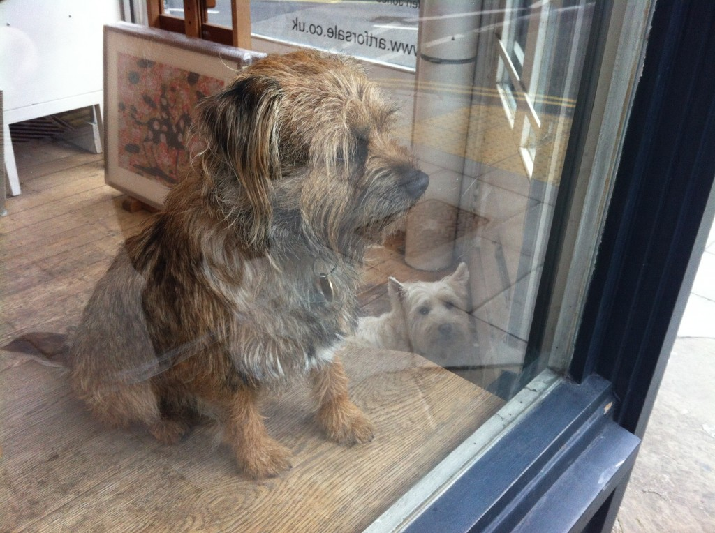Dogs in Shops - Cross Street N1