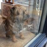 Dogs in Shops: Art Hounds on Cross Street, N1