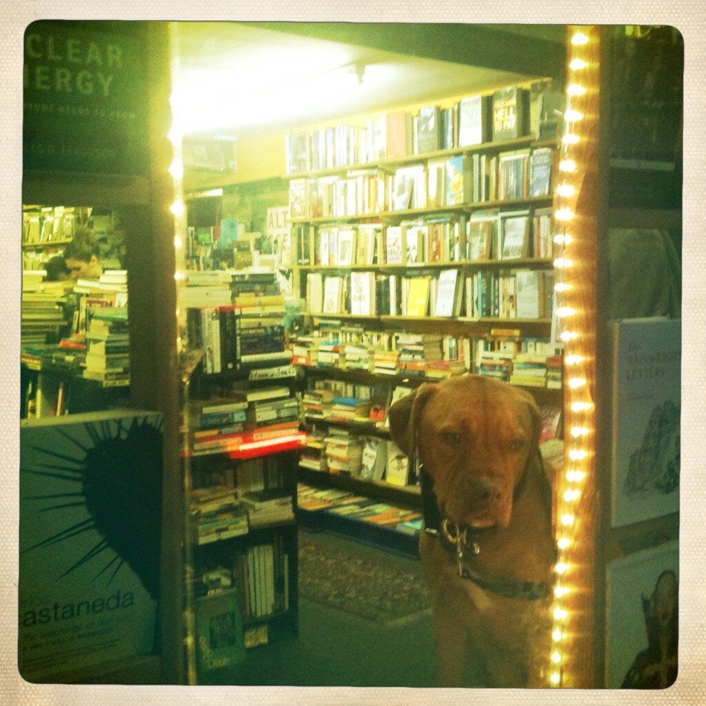 Dogs in Shops: Barking about Books on Coldharbour Lane