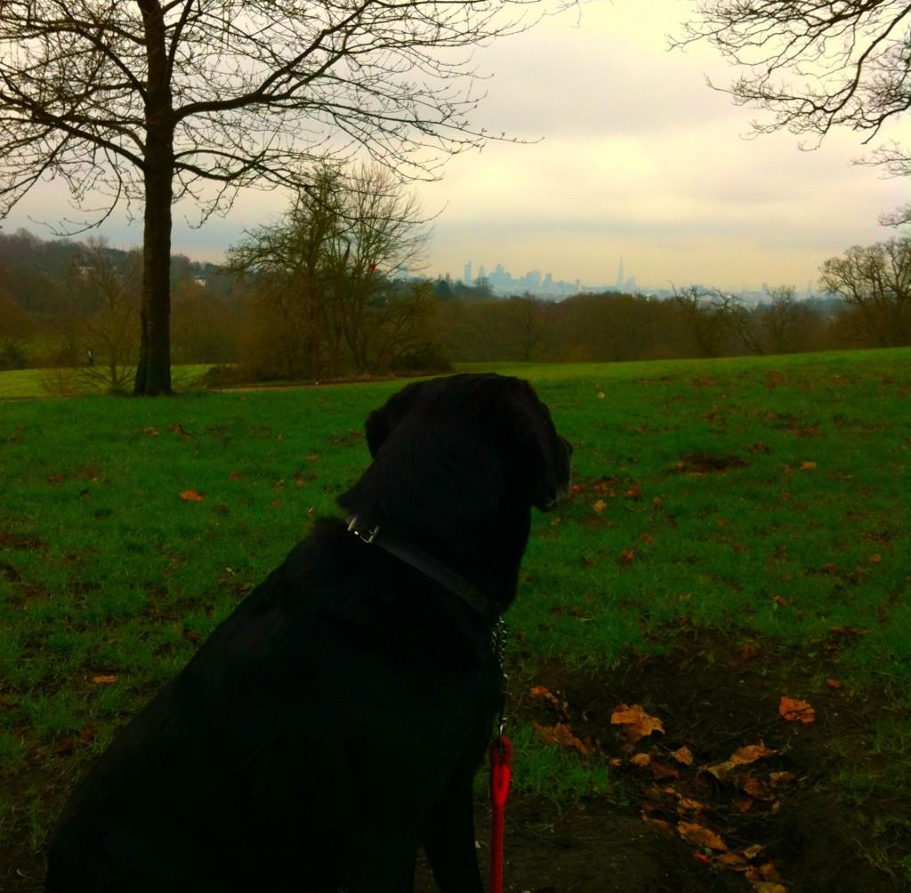 Dog on Hampstead Heath overlooking London