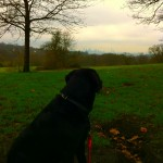 Dog on Hampstead Heath overlooking London