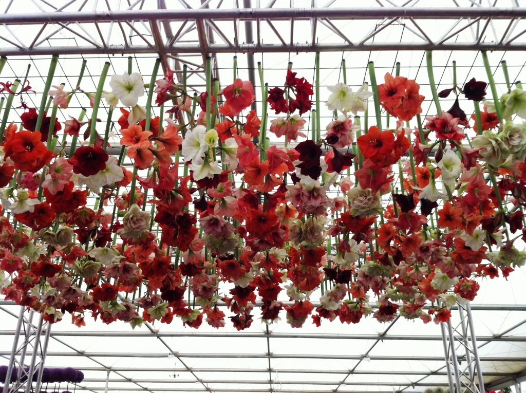 Upside down flowers at Chelsea