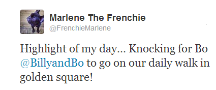 marlene the frenchie