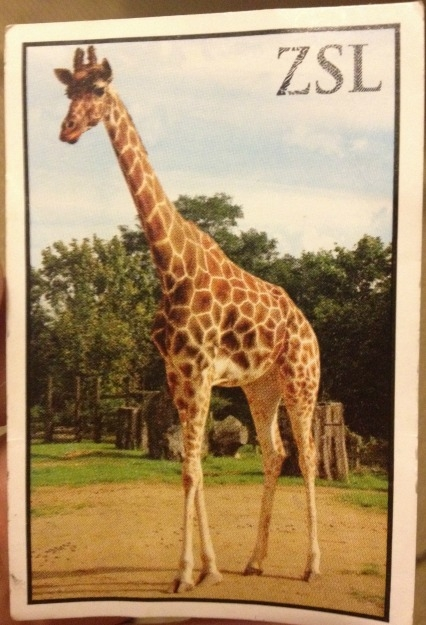 london zoo ticket
