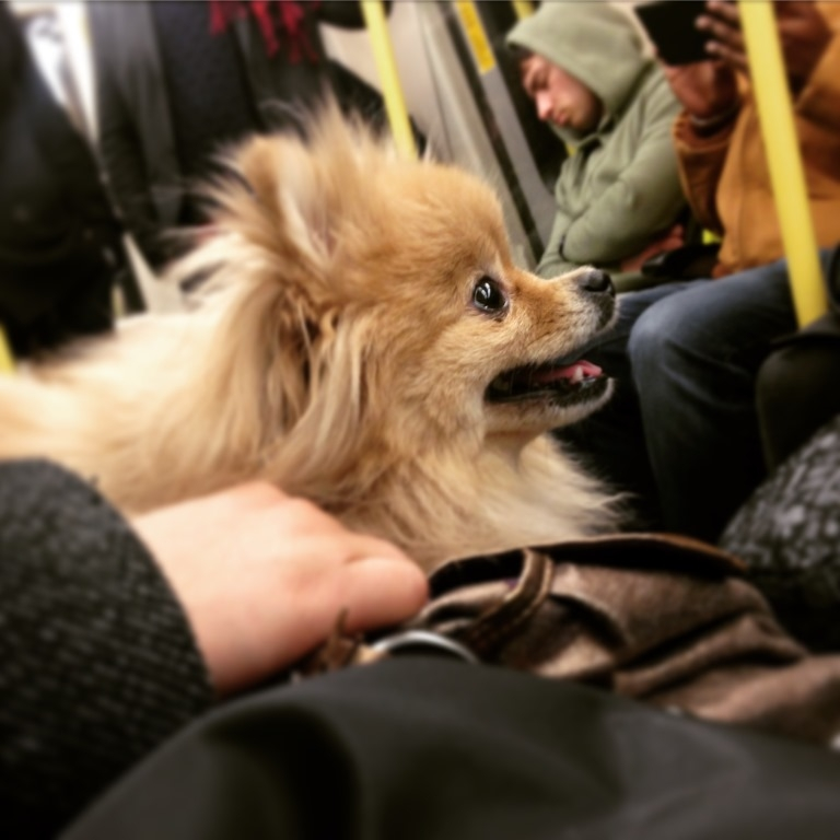 dog on tube