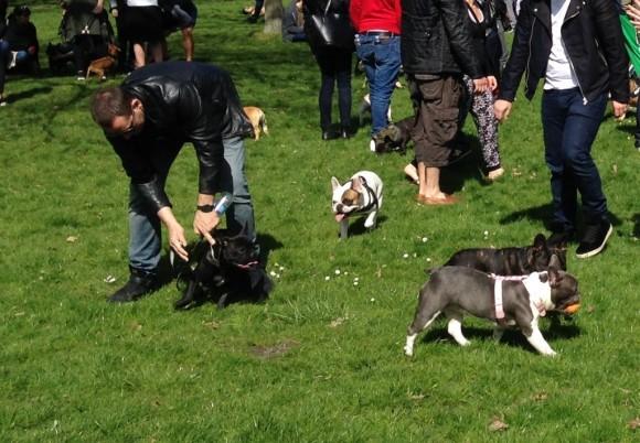 bulldog party