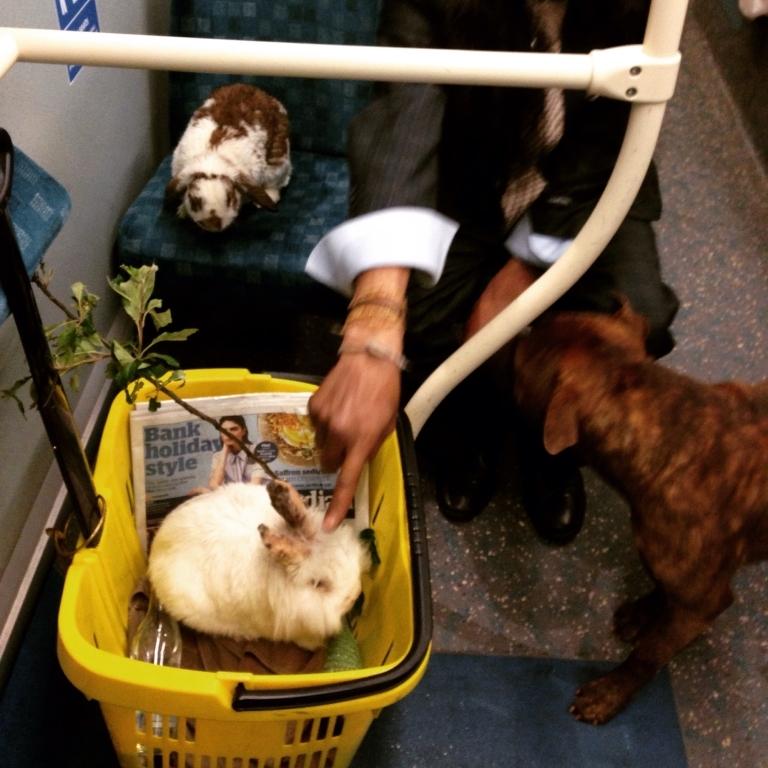 dog rabbits night bus she loves london