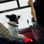 10 Excellent Dogs I've Seen Hanging Around in Central London